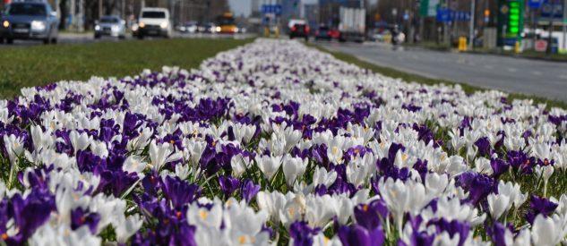 Kwiaty Warszawa