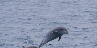 delfiny w Polsce