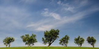 Łąka i drzewa zielone