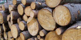 bele drewna, pnie