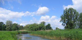Rzeka Widawa, odcinek we Wrocławiu