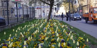Pas kwiatów w mieście