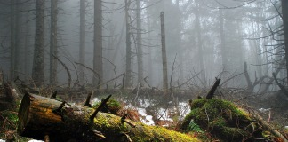 Las, puszcza, pień