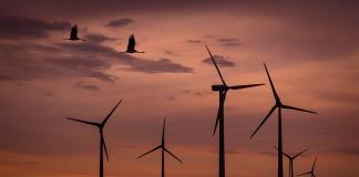 Farma wiatrowa o zachodzie słońca