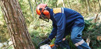 Wycinka drzew piłą mechaniczną