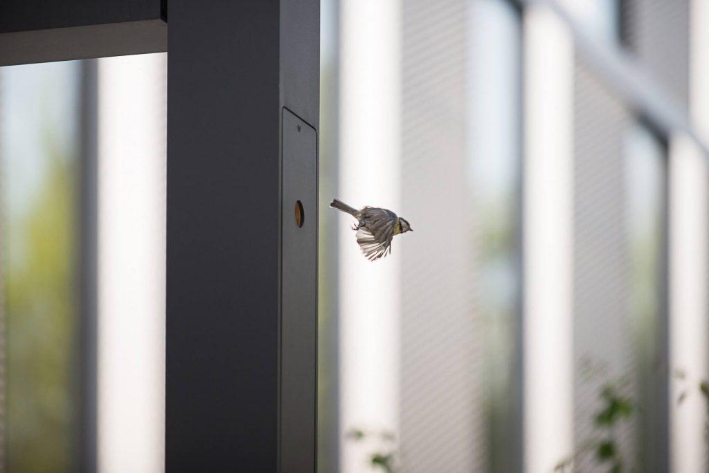 Latarnia z budką dla ptaków w Poznaniu
