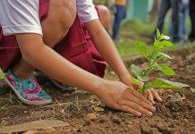 Sadzonka rośliny w ziemi