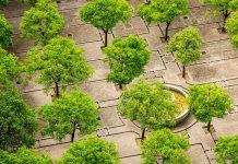 Drzewa na betonowym placu