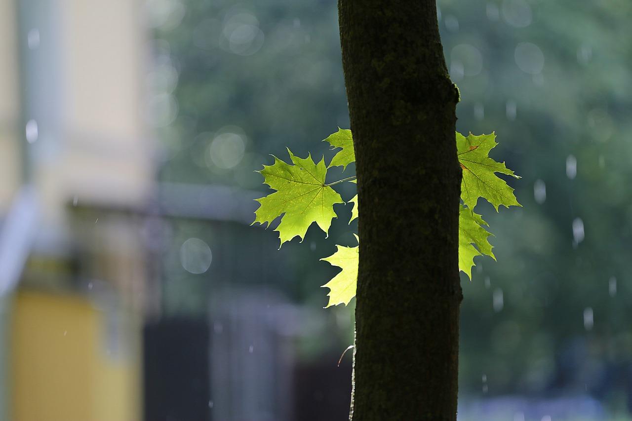 Drzewo i liść podczas deszczu