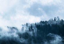 Las pokryty mgłą