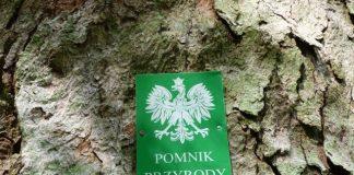 """Tablica z napisem """"Pomnik przyrody"""" na drzewie w lesie"""