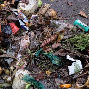bioodpady odpady kuchenne